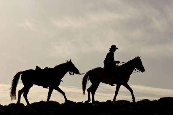 Silhouette of rider and horses in Morocco