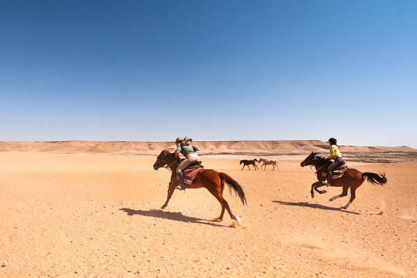 Speedy canters in the Namib Desert