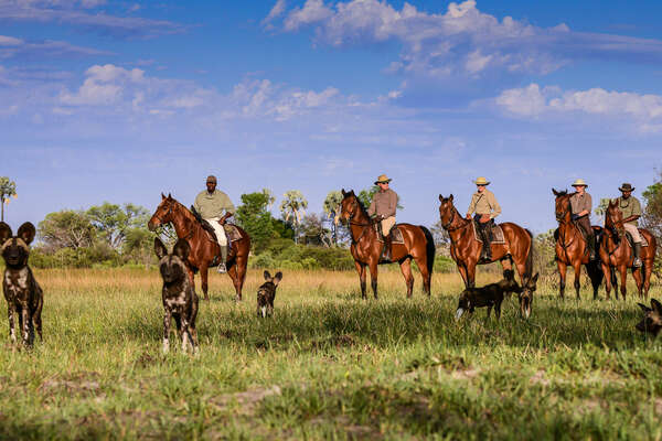 Spotting wild dogs in the saddle