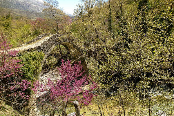 Spring in full bloom in Albania