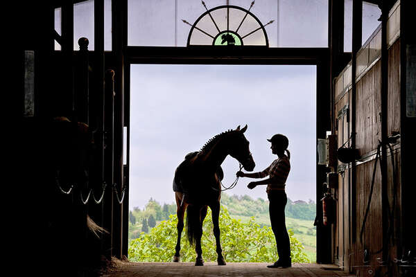 Stable and horse in Tuscany