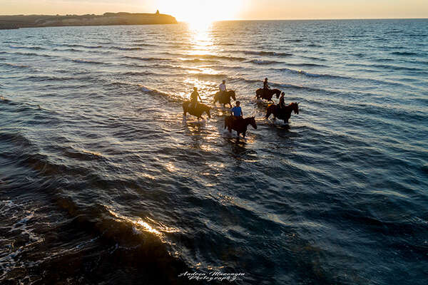Swimming with horses in Italy