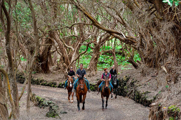Trail riding on Faial Island, Azores