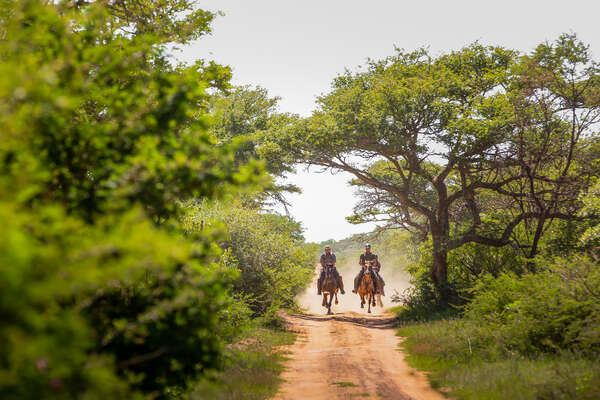 Two riding cantering through the bush at Ant's Lodges in South Africa