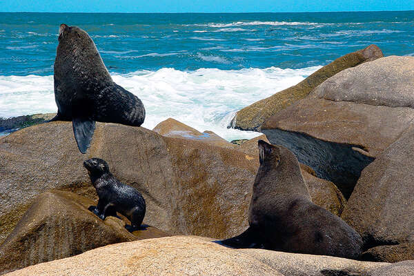 Uruguay and sea lions