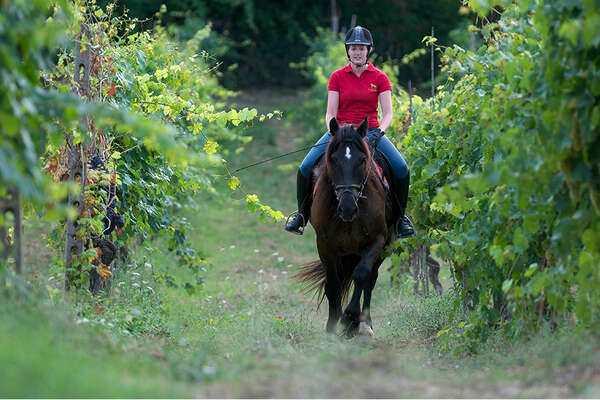 Vineyards and horse trail in Tuscany