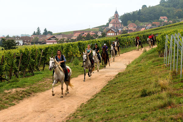 Vineyards and horses in france