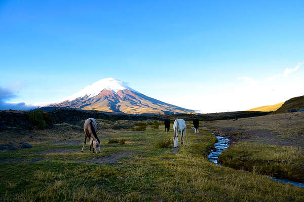 Volcano trail on horseback around Cotapaxi in Ecuador