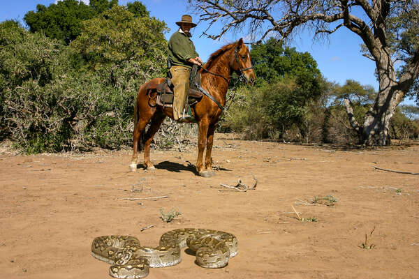 Watching a snake from horseback in Botswana