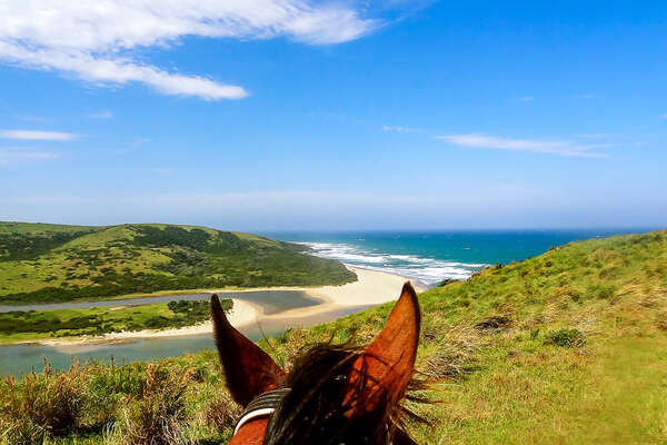 Watching the ocean from horseback