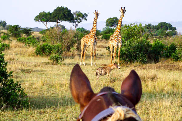 Watching wildlife between the ears of your safari horse