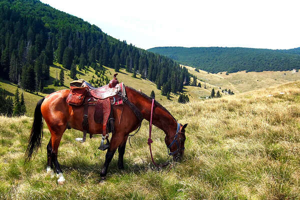 Western horse and tack against a valley