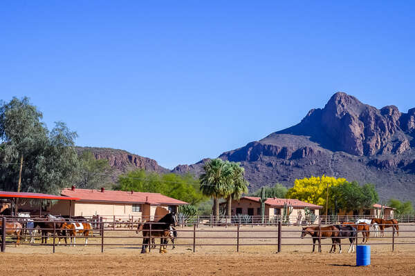 White Stallion paddocks at a guest ranch in Arizona, USA