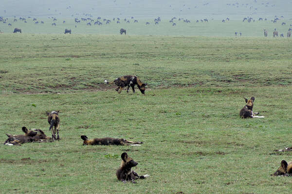 Wild animals in the African plains