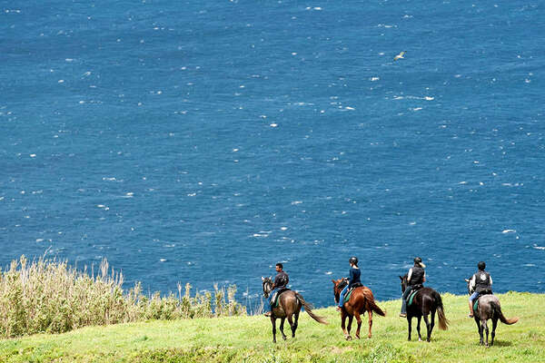 Wildcoast Azores and horses