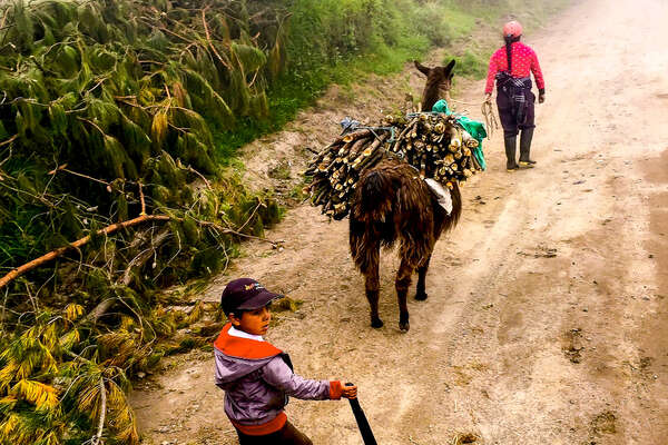 Young boys with a pack animal in Ecuador