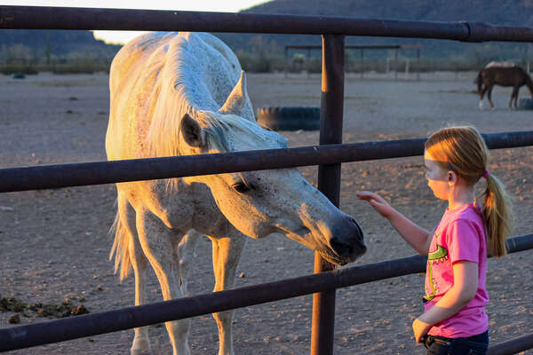 Young girl petting a horse at White Stallion Ranch