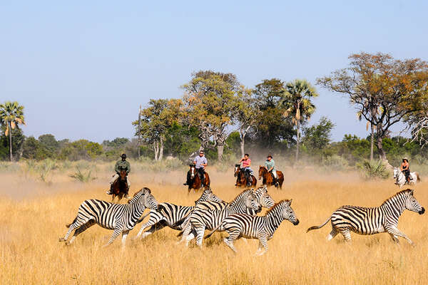 Zebras and horses in Botswana